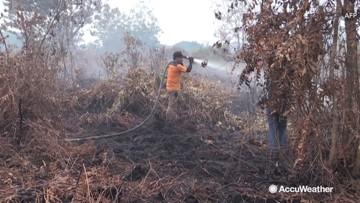 Firefighters battle blazes as wildfires rage through rainforest