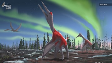 New Pterosaur Species Had a Wingspan Twice the Height of a Giraffe