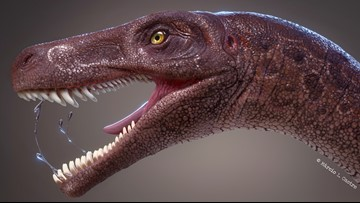 New Type of the World's Oldest Meat-Eating Dinosaur Discovered