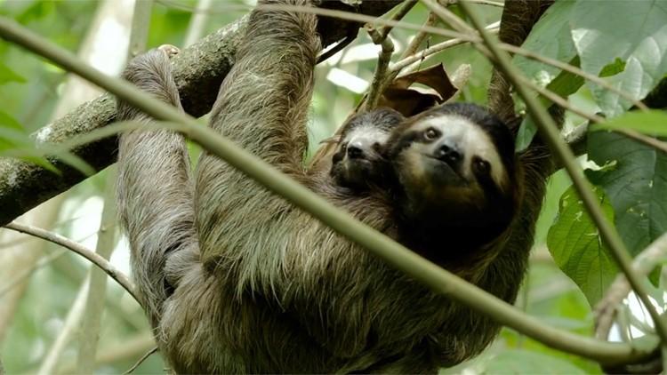 Prehistoric Giant Sloths Were 4,400 Pound Omnivores