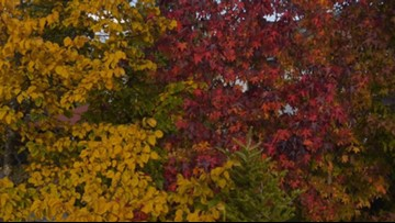 Stop the Pumpkin Spice! Fall Foliage Season Will Be Delayed