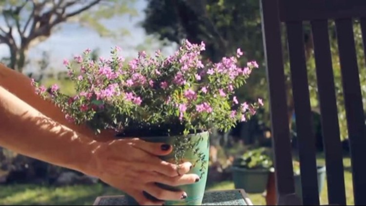 Get Your Garden Ready for the Spring and Summer Months