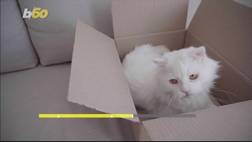 Leave the Catwalk to the Models! Why You Should Keep Your Cat Inside