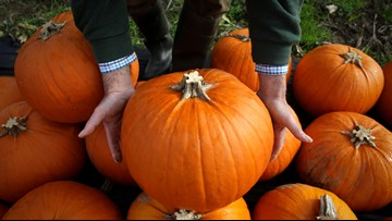 National Pumpkin Day: Where to get your pumpkin spice fix on Friday