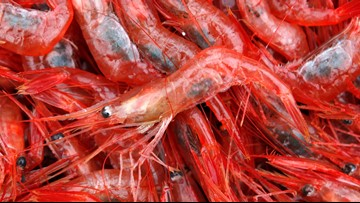 VERIFY: Yes, cocaine was found in shrimp, but only in the U.K.