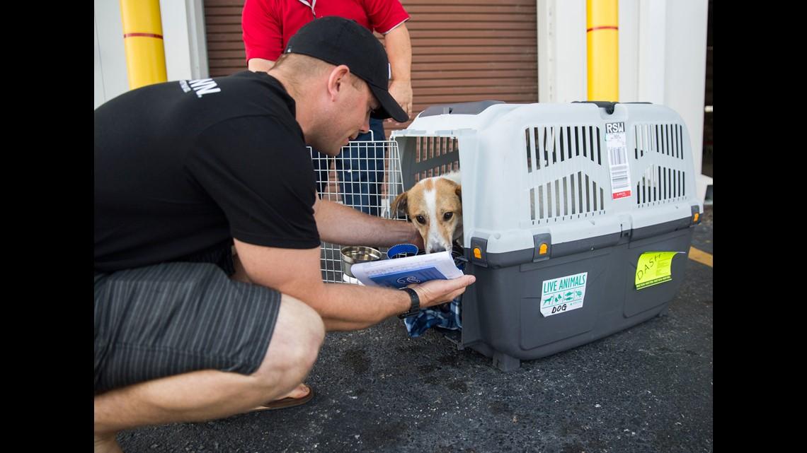 Marine Reunites With Three Legged Dog He Met Overseas 11alive Com