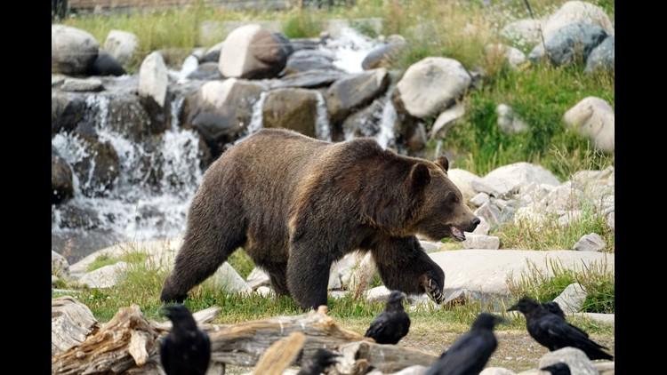 Xxx Trevor Hughes Yellowstone Teton August2018 2198