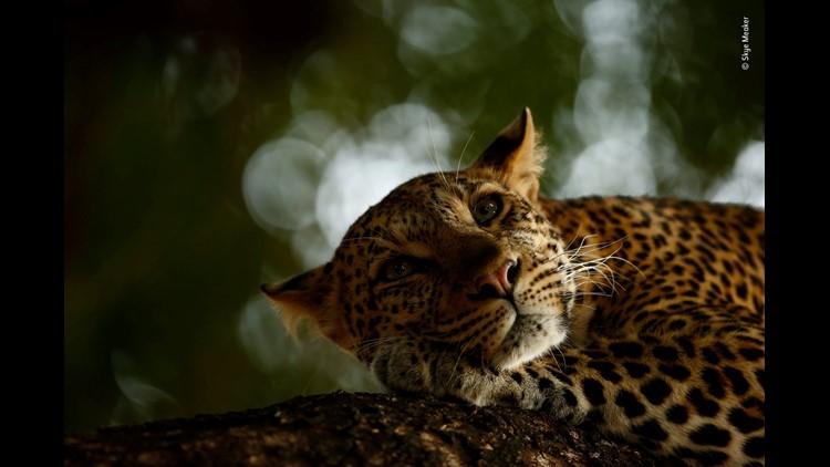 Skye Meaker Wildlife Photographer Of The Year