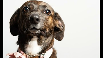 6 delightful doggies to adopt now in Atlanta