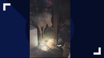 Police find horse in Minn. basement