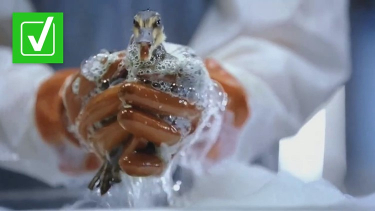 Yes, rescue workers really use Dawn dish soap to clean animals after oil spills