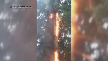 Tree bursts into flames after lightning strike in Oregon