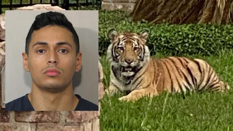 Man who escaped with pet tiger is out on bond for murder in Fort Bend County, Houston police say