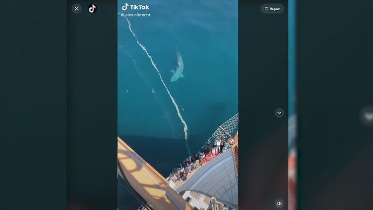 Man captures viral video of massive basking shark