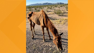 'I've never seen one that bad': Starving horse rescued in Arizona