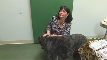 I took my dogs to a pet psychic just to see what it was like. I was intrigued by what I heard.