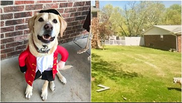 Dog who died in June gives family one last laugh on Google Street View