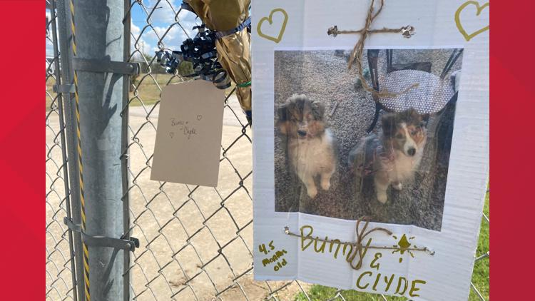 'Extremely heart wrenching' | 75 dogs killed in fire at Ponderosa Pet Resort in Georgetown