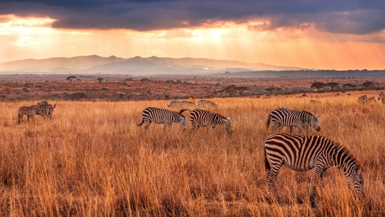 Nairobi, Kenya. (Photo by Getty Images)