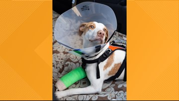 Dog thrown from Knoxville overpass recovering, being transferred to YWAC