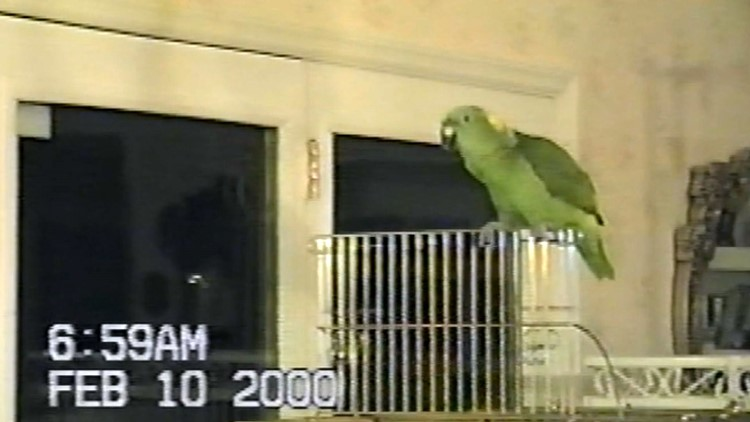 Parrot sings hilarious rendition of \'Rocky Top\' on abandoned VHS tape