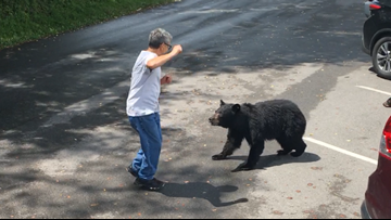 WATCH: Man confronts momma bear and cubs, angers visitors and park rangers