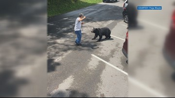 Momma bear won't be punished for lunging at man that got too close, but neither will he