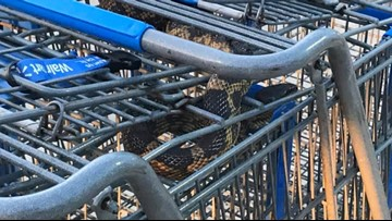 Snake in Walmart shopping cart leads to a warning in Texas