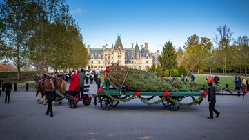 34-foot tall, 2,000-pound  Christmas tree arrives at the Biltmore House for the holidays