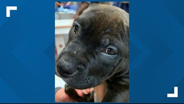 Grand Jury will get case of man charged with cutting the ears off puppies