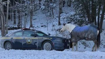Horse, New York trooper go hood to hoof in peaceful standoff