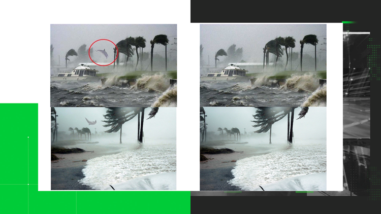 Dolphins in Hurricanes Fake Photos