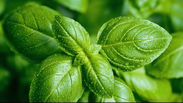 Fresh basil from Mexico linked to intestinal sickness, FDA warns