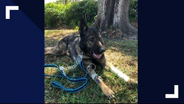 K-9 Titan back on his paws after being shot
