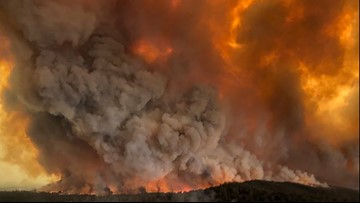 Nearly half a billion animals impacted by Australia wildfires