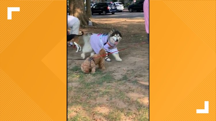 DC community throws birthday party for 101-year-old dog