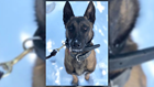 K-9 officer killed, driver dead after Virginia State Police troopers exchange gunfire with driver