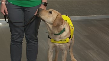 Izzy, 11Alive's 'Puppy with a Purpose' graduates to being a guide dog