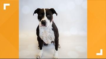 Meet Cooper: Gwinnett Animal Welfare's pet of the week