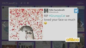 Rest in Power, Grumpy Cat!