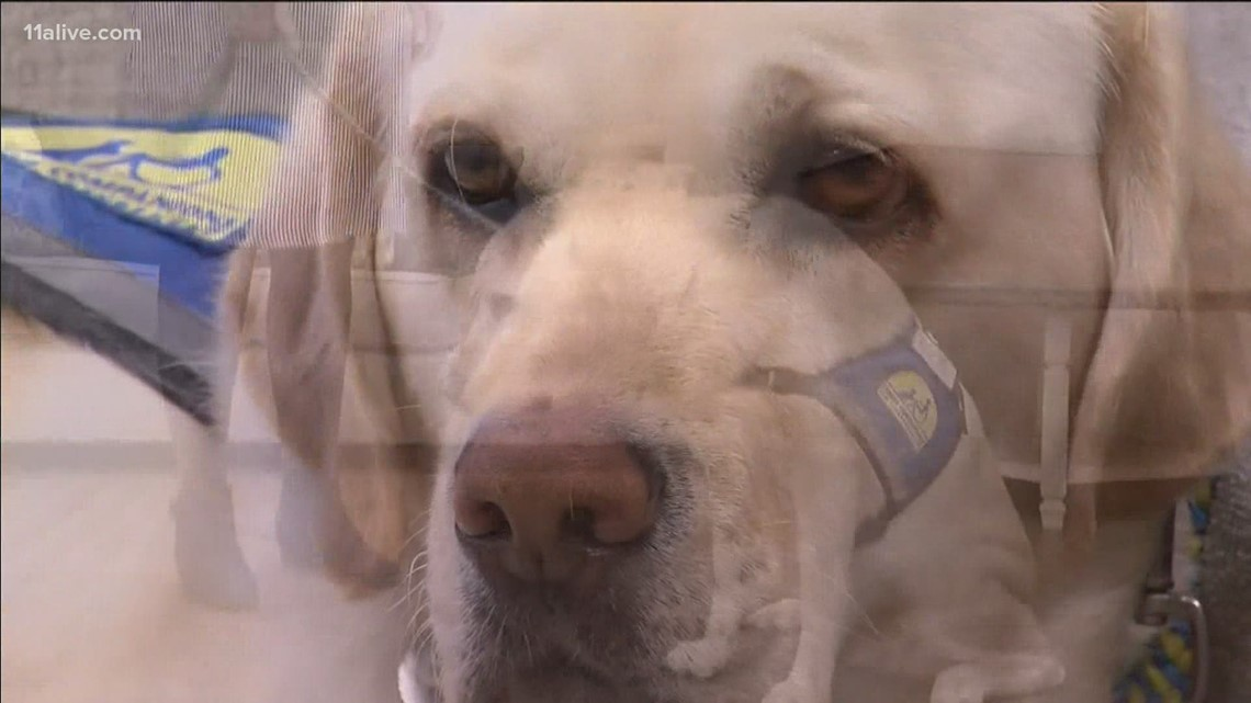 Court support dog nominated for national award