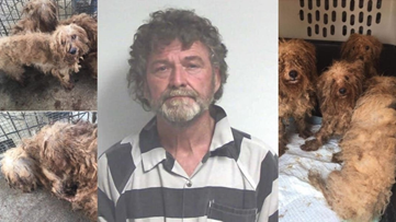 Puppy mill owner fined $500k for alleged mistreatment of 700 matted and injured dogs