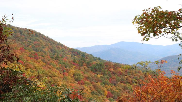 NE GA Foliage