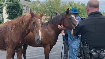 Johns Creek officers round up horses walking through subdivision