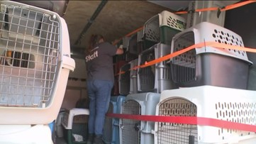 More than 200 dogs and cats rescued from Tennessee home; 33 dogs coming to Atlanta