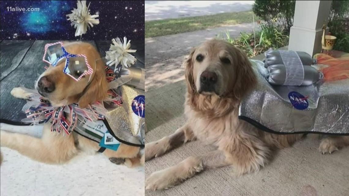 Birthdays for dogs, world ugliest dogs: Good & Odd