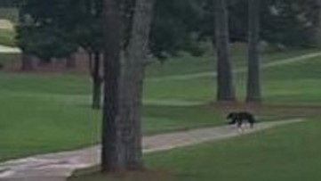 Hey-a Boo-boo! Little bear spotted wandering in Johns Creek