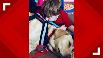 Rescue dogs - trained to serve military members - now helping young boy with autism