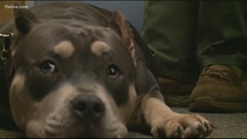 Stolen prized show dog is back with owners