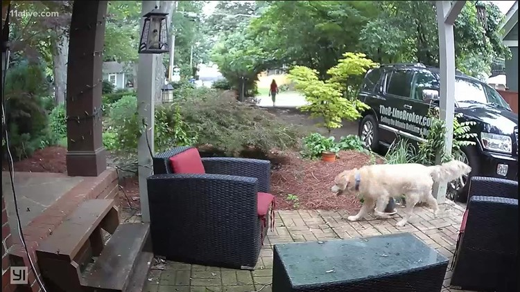 Pooch pirate responsible for Frisbee thefts in Midtown